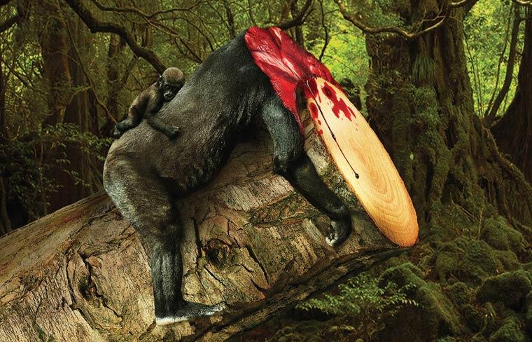 campagne-sensibilisation-deforestation-asia